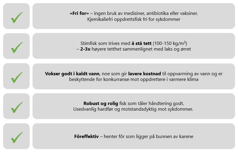 vaksinering av laks